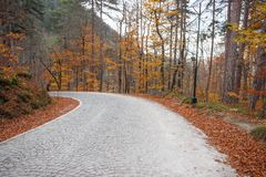 Camino en el bosque en el otoño fotografía de archivo libre de regalías