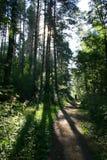 Camino en el bosque (señorío Mihailovskoe) Fotos de archivo
