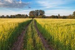Camino en el campo Foto de archivo