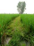 Camino en el campo del arroz Imagen de archivo