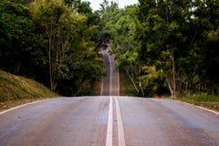 Camino en el fondo del bosque Imagen de archivo libre de regalías