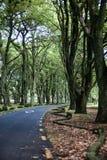 Camino en el jardín de Nueva Zelanda fotografía de archivo