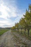 Camino en el lado del país con los árboles y el cielo del blus Imagenes de archivo