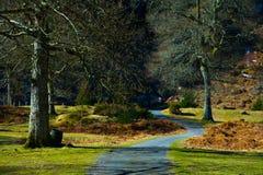 Camino en el parque Foto de archivo libre de regalías