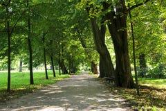 Camino en el parque Fotografía de archivo libre de regalías