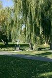 Camino en el parque Imágenes de archivo libres de regalías