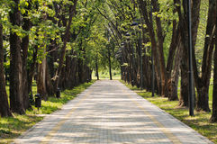 Camino en el parque. fotos de archivo