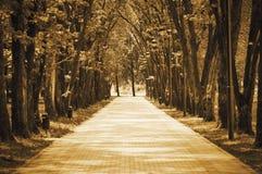Camino en el parque. Foto de archivo