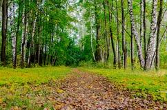 Camino en el parque del otoño Imágenes de archivo libres de regalías