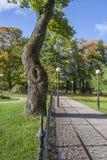 Camino en el parque del otoño Fotografía de archivo libre de regalías