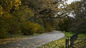 Camino en el parque del otoño cubierto con las hojas caidas almacen de metraje de vídeo