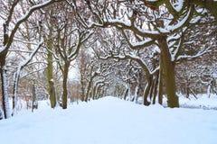 Camino en el parque en el invierno nevoso Fotografía de archivo