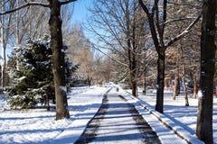 camino en el parque iluminado por el sol debajo de la nieve imagenes de archivo