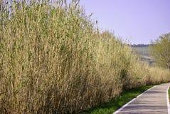 Camino en el verde Imagen de archivo libre de regalías