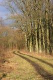 Camino en invierno asoleado Imagen de archivo libre de regalías