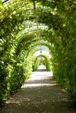 Camino en jardín Imagen de archivo libre de regalías