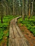 Camino en Krkonose Foto de archivo