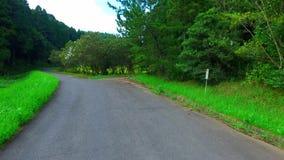 Camino en la arboleda de woods