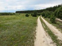 Camino en la arboleda de woods Fotografía de archivo