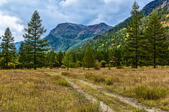Camino en la arboleda de woods Foto de archivo libre de regalías