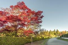 Camino en la calle del otoño con los árboles y las hojas caidas, cerca verde Fotografía de archivo libre de regalías