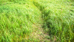 Camino en la hierba imagen de archivo