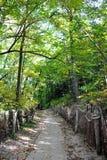 Camino en la madera Fotos de archivo