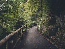 Camino en la madera Foto de archivo