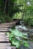 Camino en la naturaleza Foto de archivo