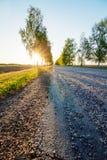 Camino en la puesta del sol en verano con el abedul Imagen de archivo libre de regalías