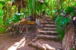 Camino en la selva, Vallee de el Mai, Seychelles foto de archivo libre de regalías