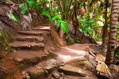 Camino en la selva, Vallee de el Mai, Seychelles fotos de archivo libres de regalías