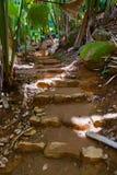 Camino en la selva - Vallee del Mai - Seychelles imagen de archivo