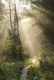 Camino en las maderas Imagenes de archivo