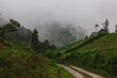 Camino en las montañas tropicales Pista en la niebla y las nubes de la montaña foto de archivo