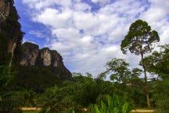 Camino en las zonas tropicales Foto de archivo