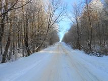 Camino en los bosques fotos de archivo