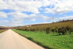 Camino en los viñedos del otoño Imágenes de archivo libres de regalías