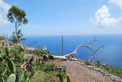 Camino en Madeira Fotos de archivo