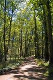 Camino en maderas imagen de archivo