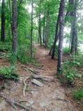 Camino en maderas Imagen de archivo libre de regalías