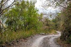Camino en maderas Foto de archivo libre de regalías