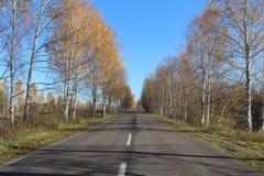 Camino en otoño Abedules amarillos imagen de archivo