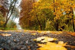 Camino en paisaje del otoño del bosque del otoño Fotografía de archivo libre de regalías