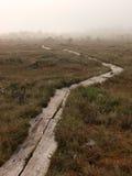 Camino en pantano Fotografía de archivo
