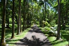 Camino en parque Foto de archivo