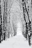 Camino en parque Imagenes de archivo