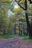 Camino en parque del bosque del otoño imagenes de archivo