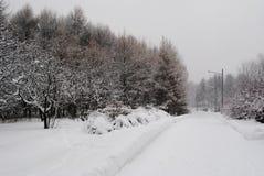 Camino en parque del invierno Imagen de archivo libre de regalías