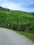 Camino en plantaciones de té imagenes de archivo